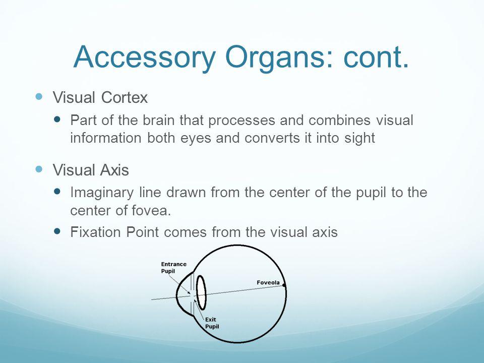 Accessory Organs: cont.