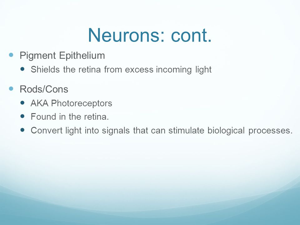 Neurons: cont. Pigment Epithelium Rods/Cons