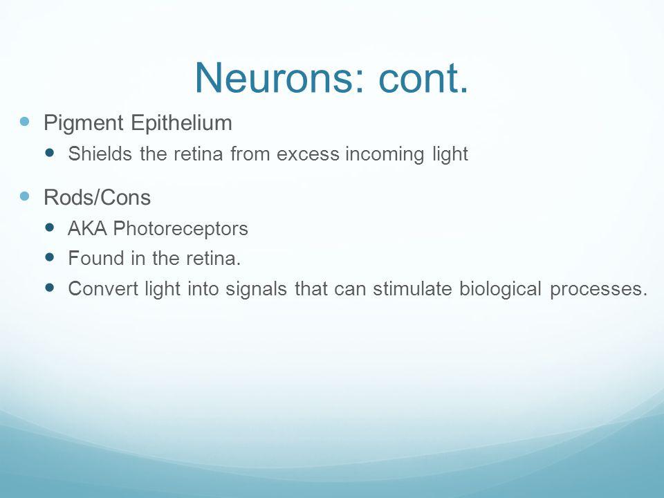 Neurons: cont. Pigment Epithelium Rods/Cons