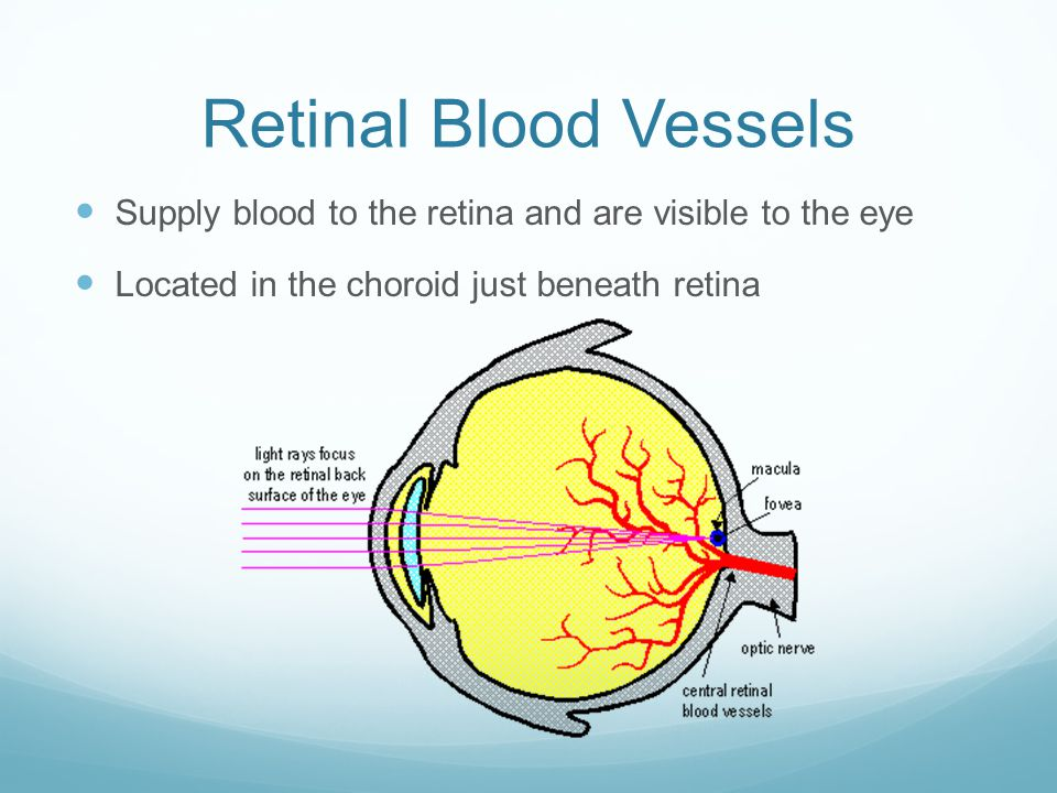 Retinal Blood Vessels Supply blood to the retina and are visible to the eye.