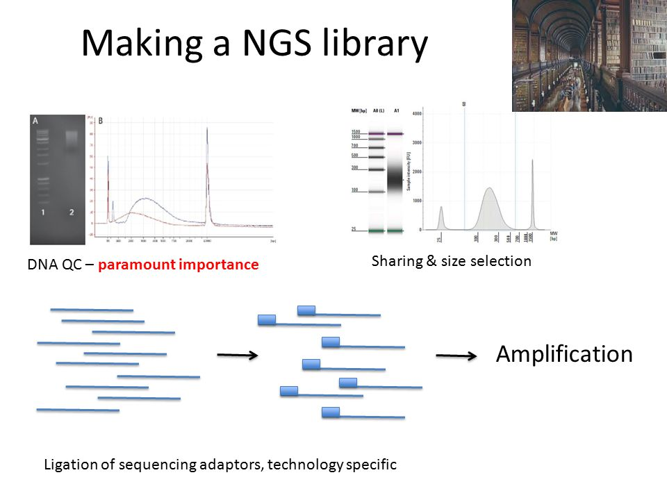 Making a NGS library Amplification Sharing & size selection