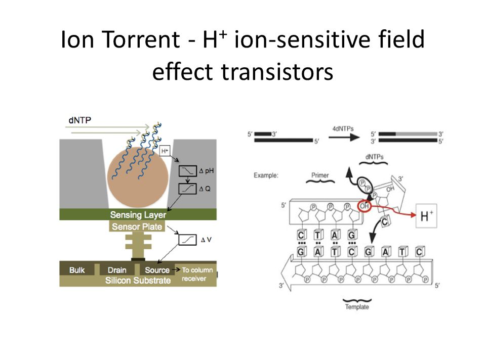Ion Torrent - H+ ion-sensitive field effect transistors