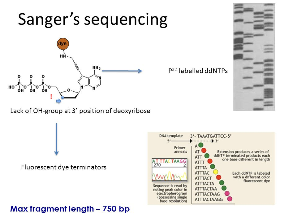 Sanger's sequencing Max fragment length – 750 bp P32 labelled ddNTPs !