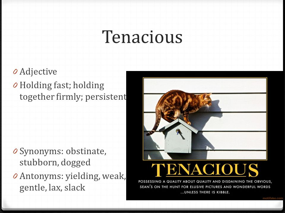 Tenacious Adjective Holding fast; holding together firmly; persistent