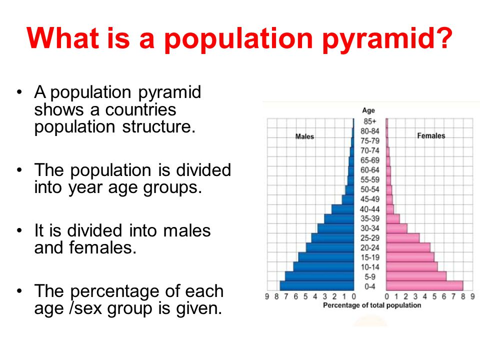 What is a population pyramid