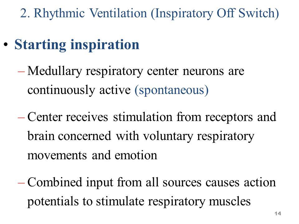 2. Rhythmic Ventilation (Inspiratory Off Switch)