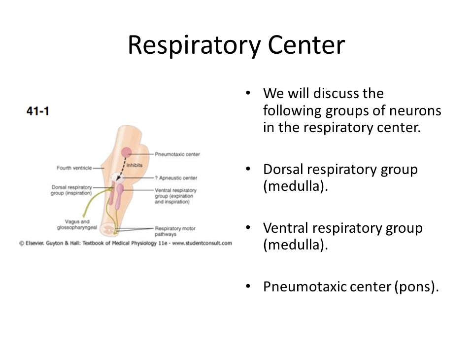 Respiratory Center We will discuss the following groups of neurons in the respiratory center. Dorsal respiratory group (medulla).