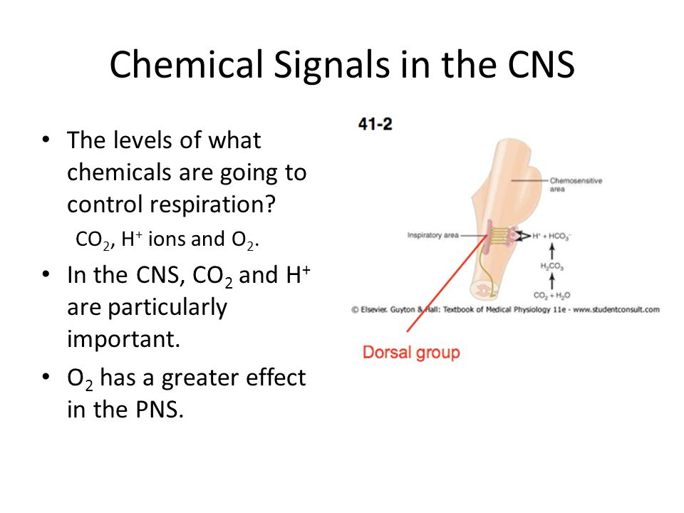 Chemical Signals in the CNS