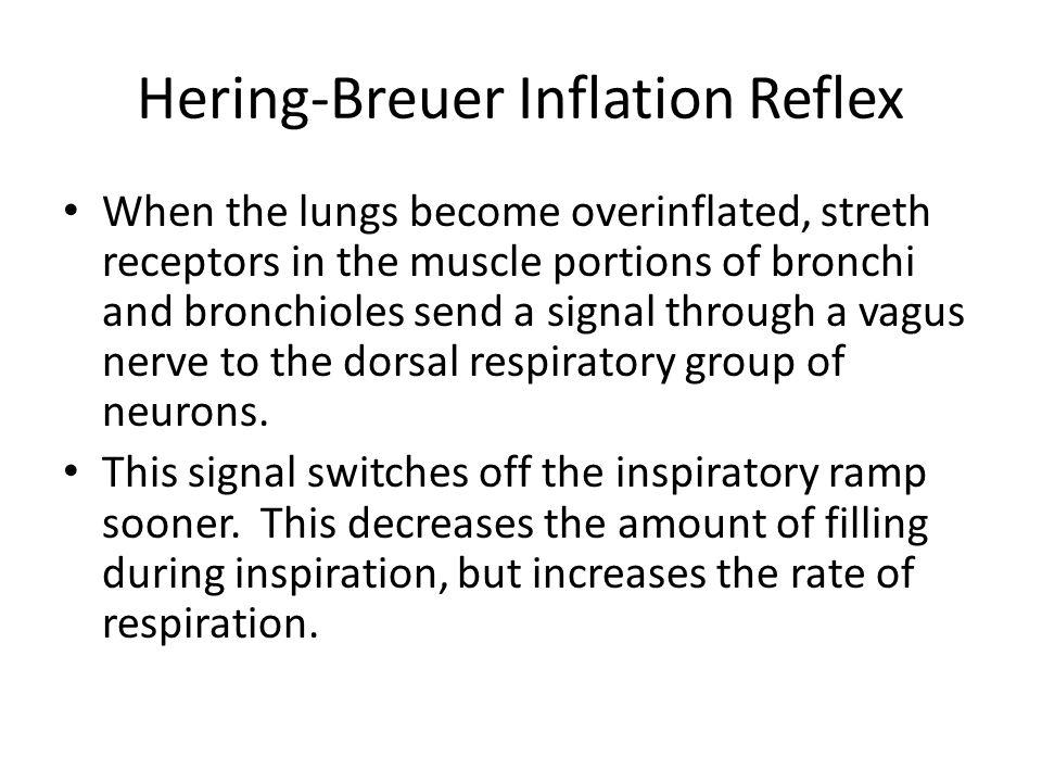 Hering-Breuer Inflation Reflex