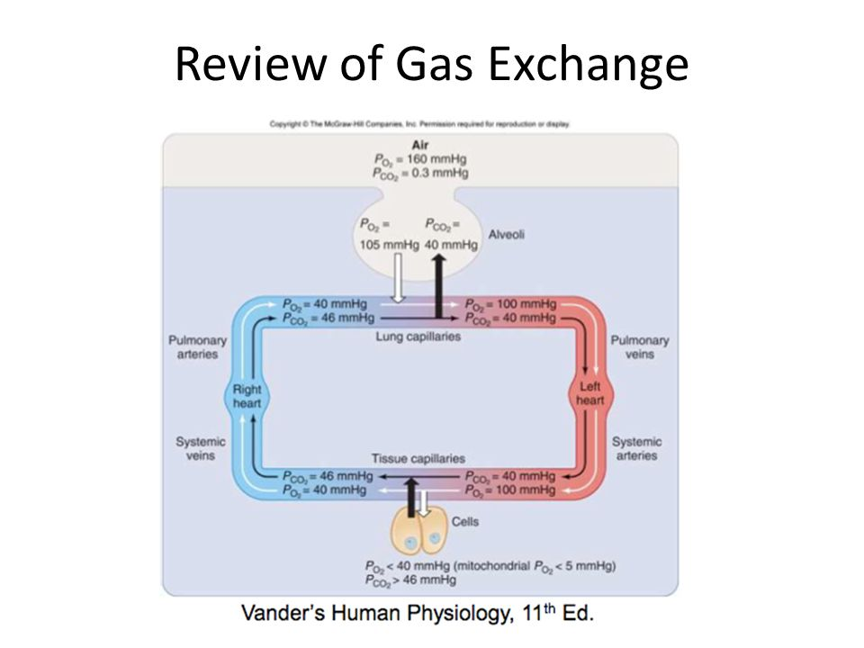 Review of Gas Exchange