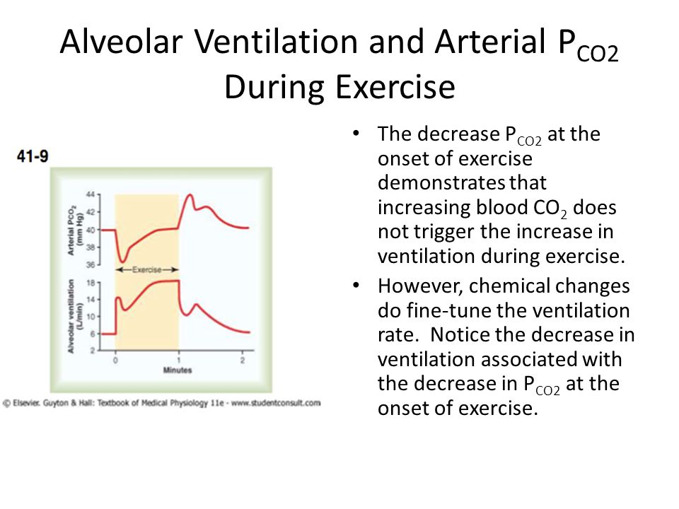 Alveolar Ventilation and Arterial PCO2 During Exercise