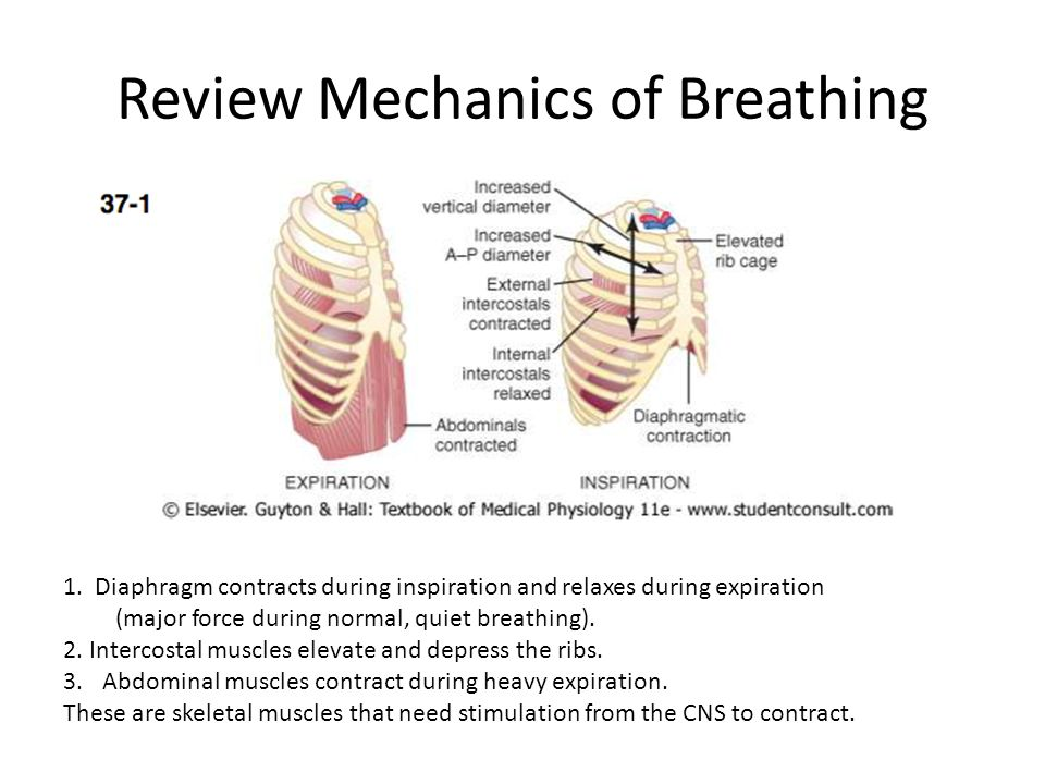 Review Mechanics of Breathing