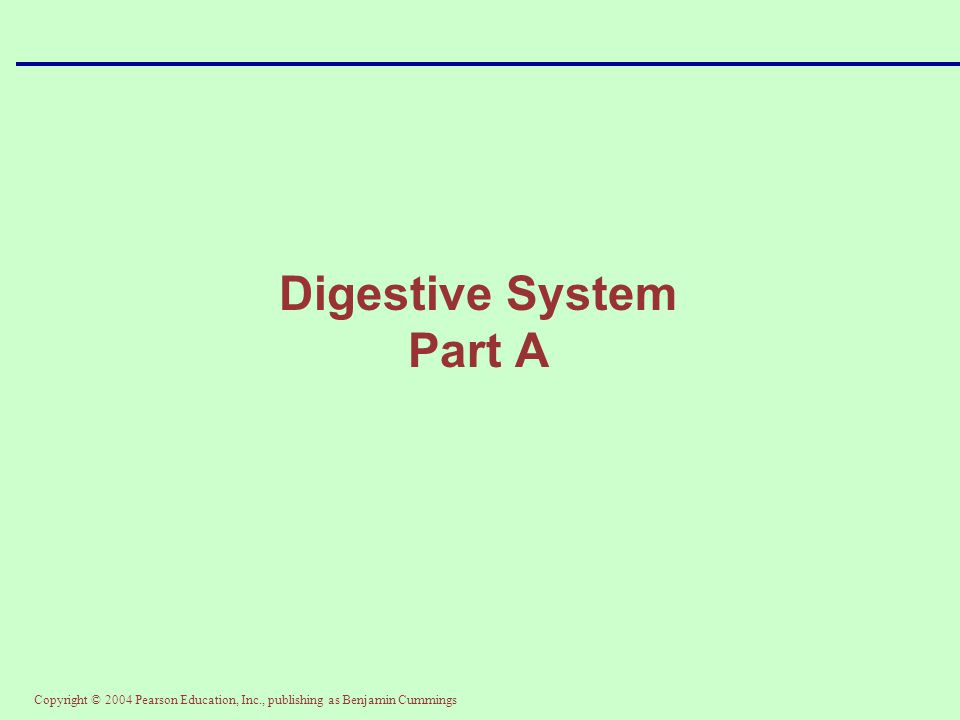 Digestive System Part A
