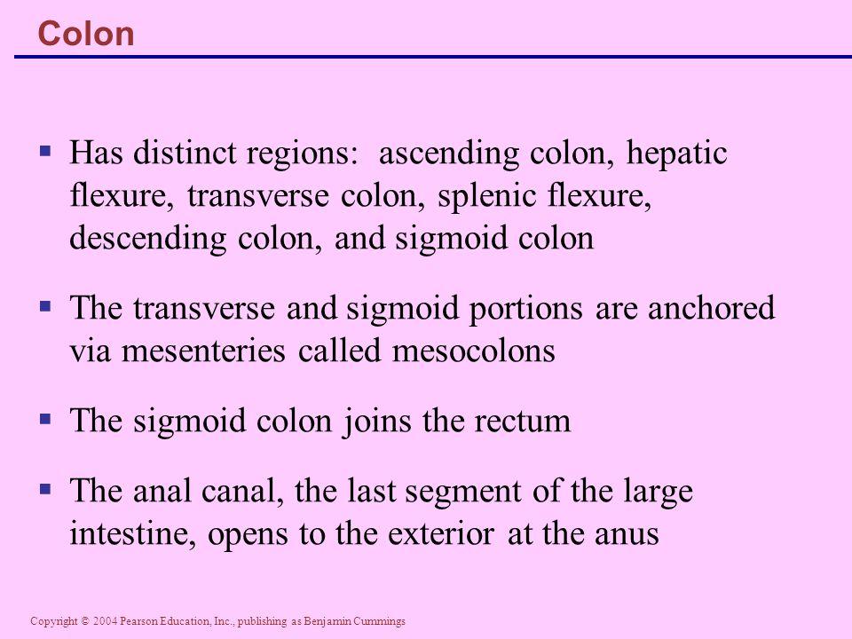 The sigmoid colon joins the rectum