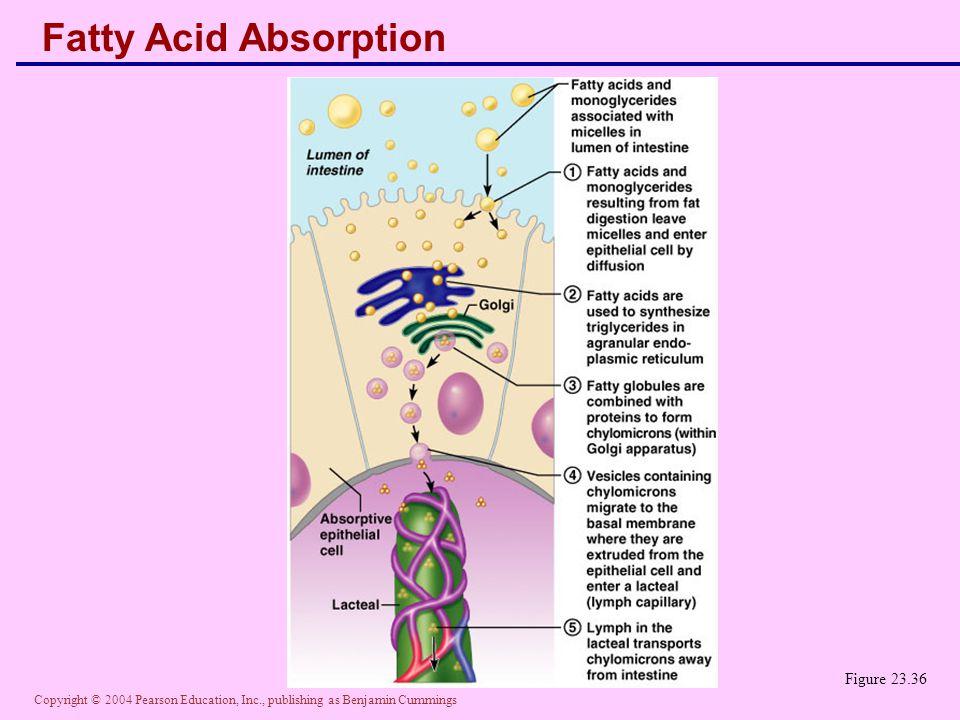 Fatty Acid Absorption Figure 23.36