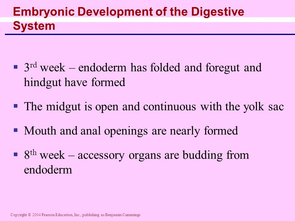 Embryonic Development of the Digestive System
