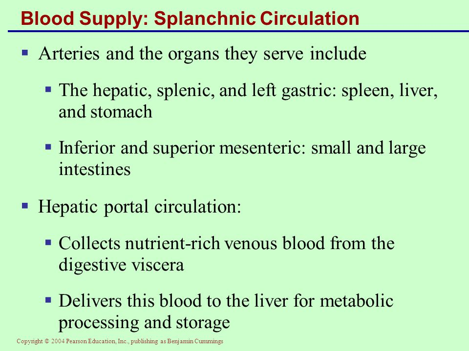 Blood Supply: Splanchnic Circulation