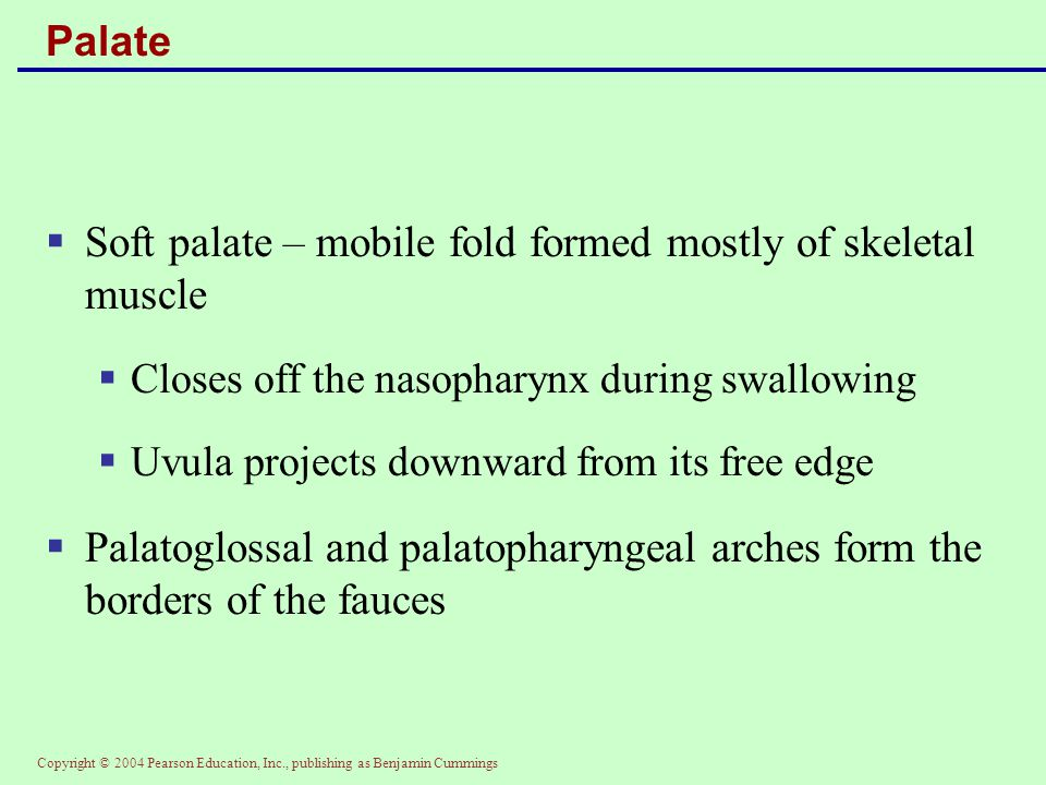 Soft palate – mobile fold formed mostly of skeletal muscle