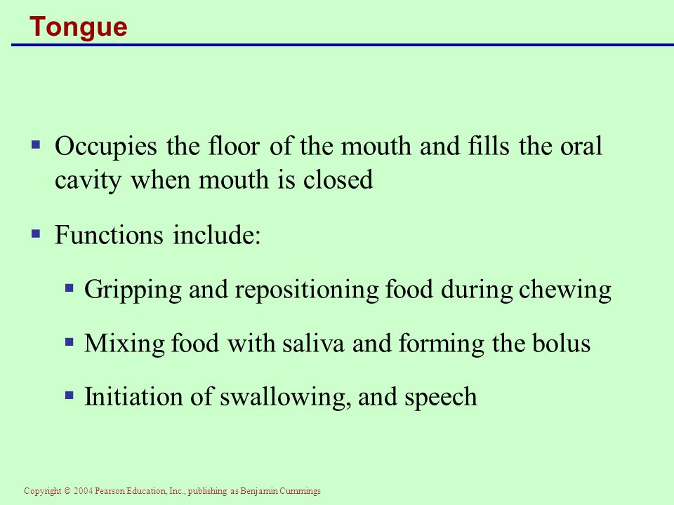 Tongue Occupies the floor of the mouth and fills the oral cavity when mouth is closed. Functions include: