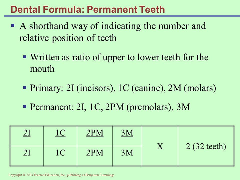 Dental Formula: Permanent Teeth