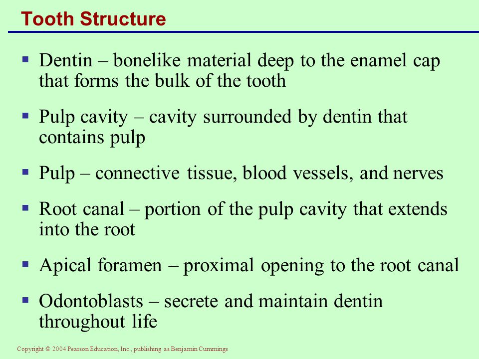 Pulp cavity – cavity surrounded by dentin that contains pulp