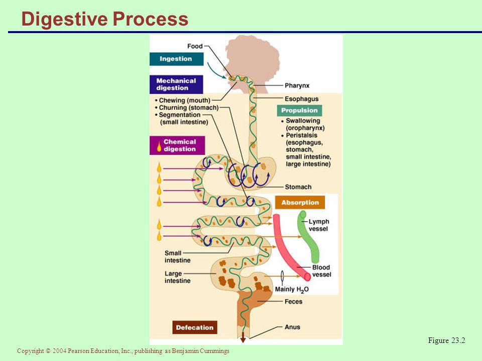 Digestive Process Figure 23.2