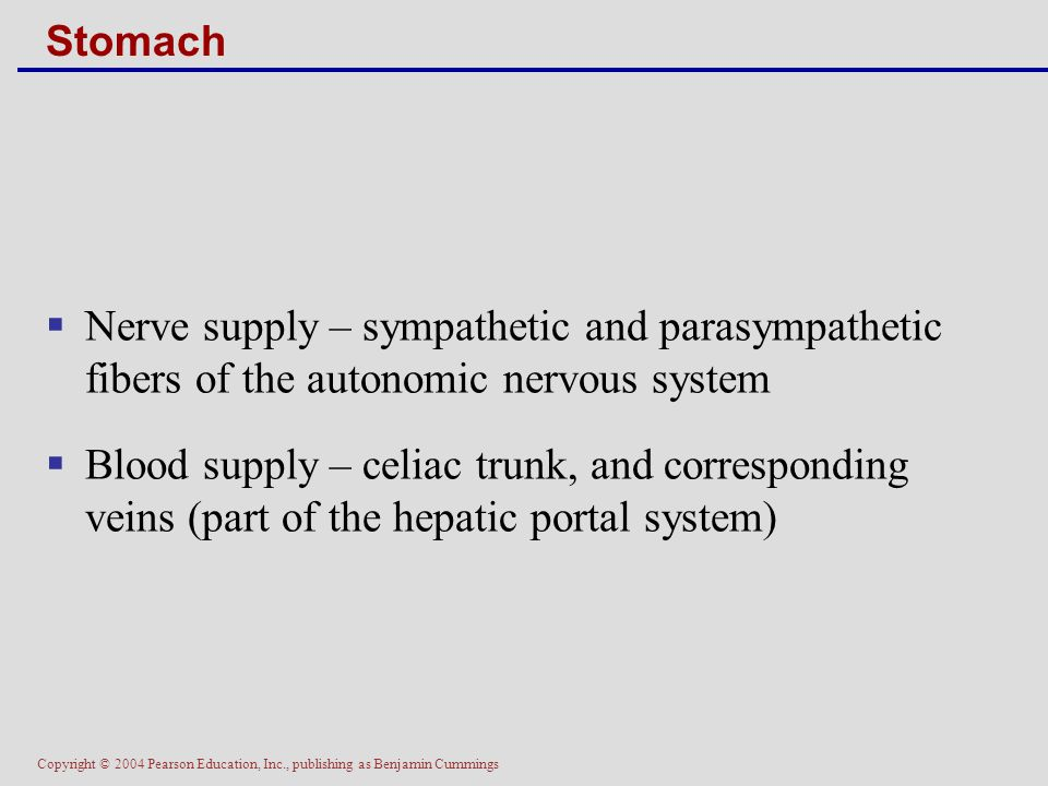 Stomach Nerve supply – sympathetic and parasympathetic fibers of the autonomic nervous system.