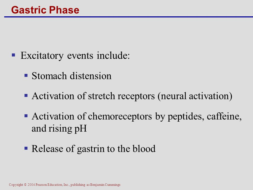 Excitatory events include:
