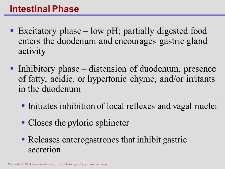 Intestinal Phase Excitatory phase – low pH; partially digested food enters the duodenum and encourages gastric gland activity.