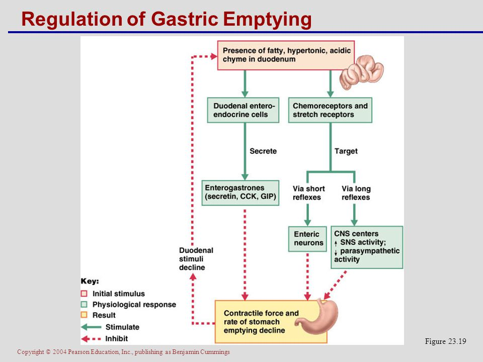 Regulation of Gastric Emptying