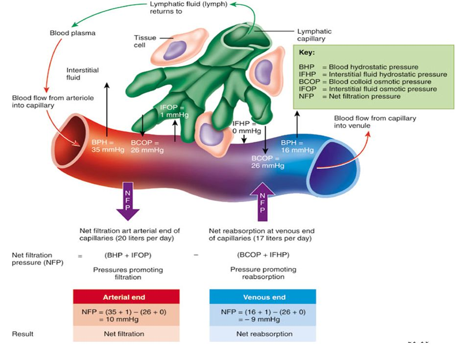 Discuss the slight leftover fluid absorbed by the lymphatic system