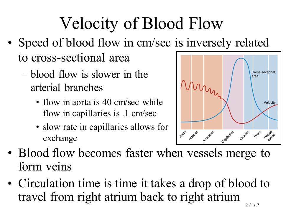 Velocity of Blood Flow Speed of blood flow in cm/sec is inversely related to cross-sectional area. blood flow is slower in the arterial branches.