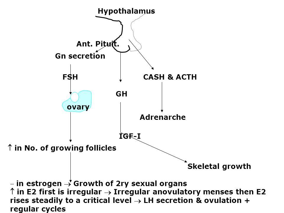 Hypothalamus Ant. Pituit. Gn secretion. FSH CASH & ACTH. GH. ovary. Adrenarche.