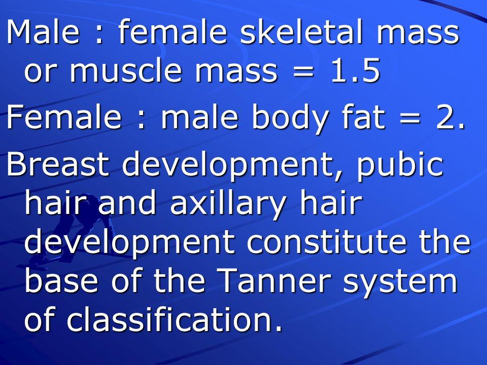 Male : female skeletal mass or muscle mass = 1.5