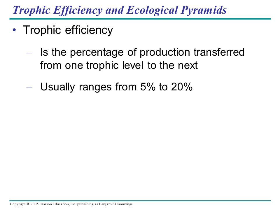 Trophic Efficiency and Ecological Pyramids
