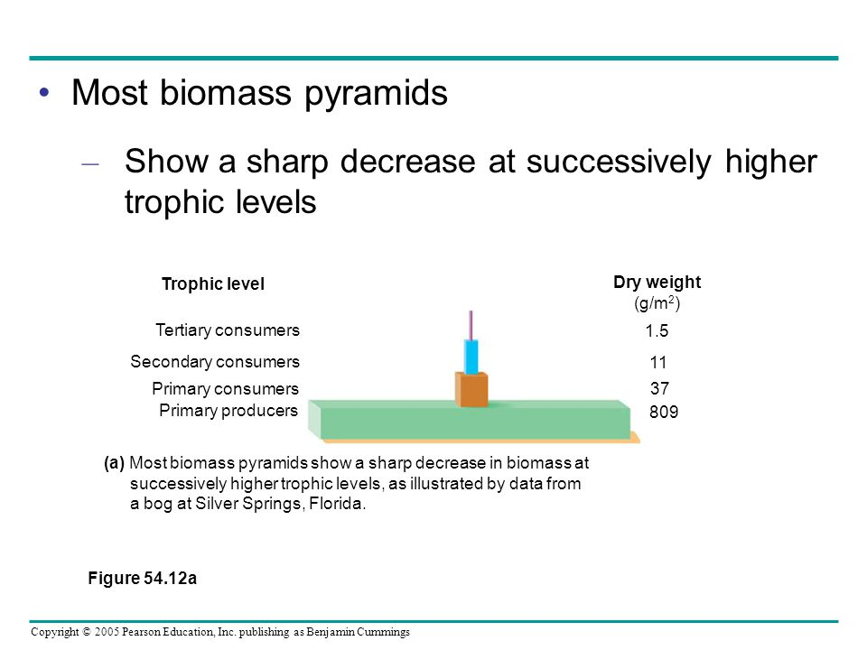 Most biomass pyramids Show a sharp decrease at successively higher trophic levels. Figure 54.12a.