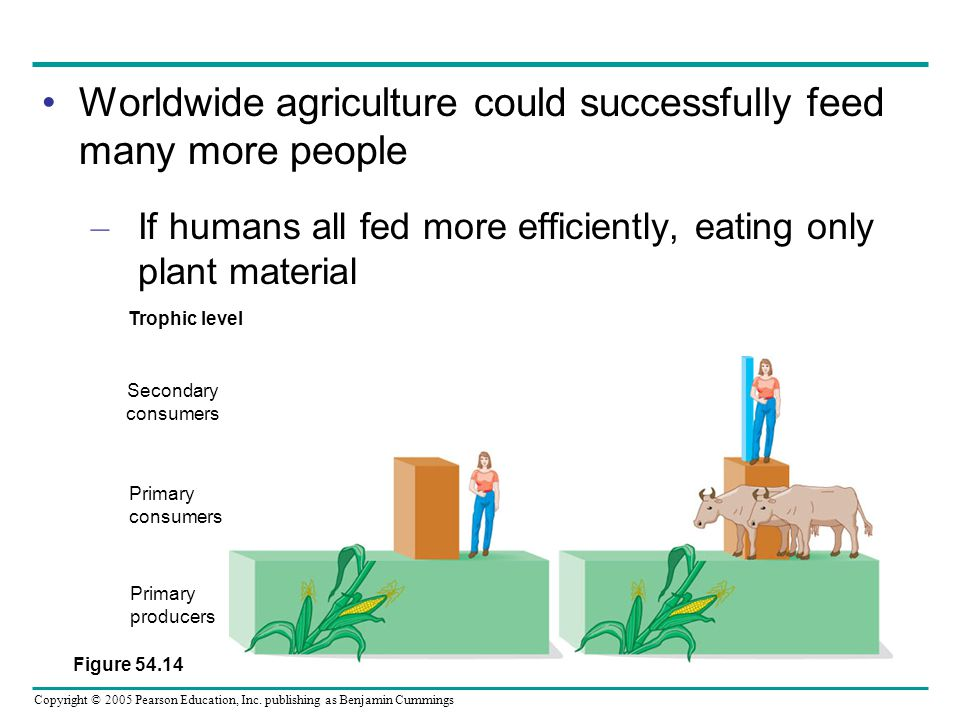 Worldwide agriculture could successfully feed many more people