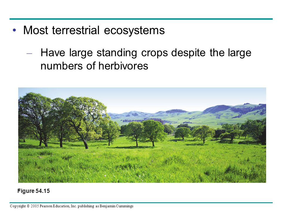 Most terrestrial ecosystems