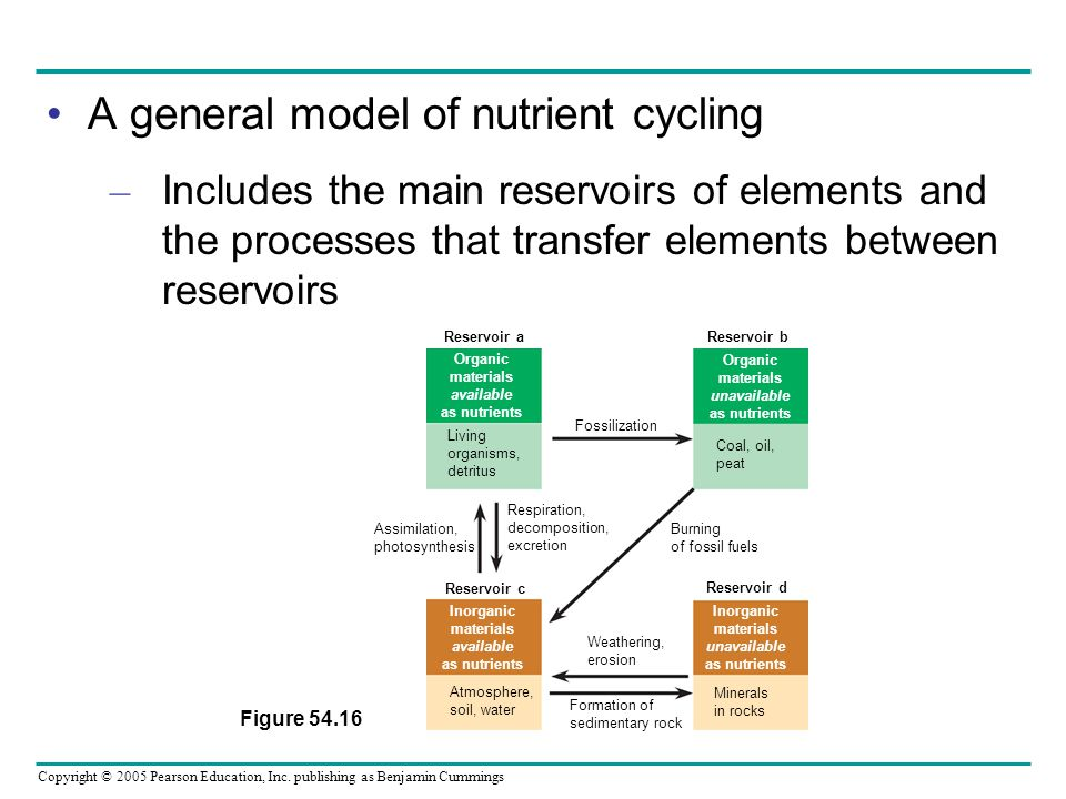 A general model of nutrient cycling