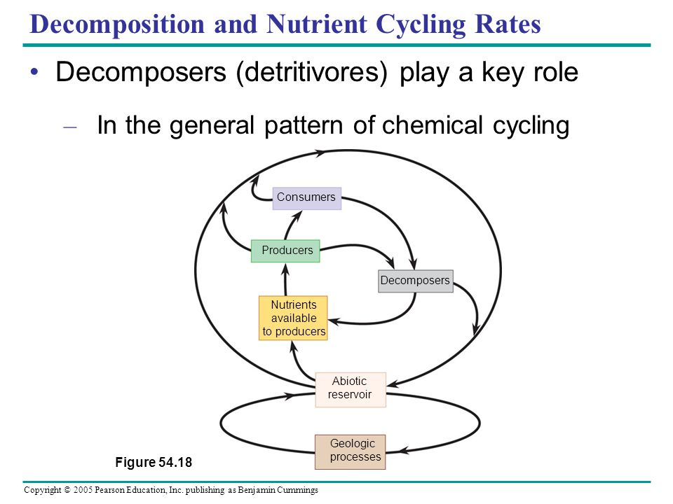 Decomposition and Nutrient Cycling Rates