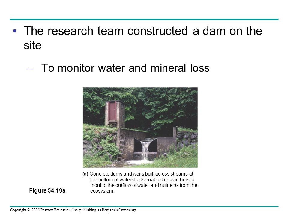 The research team constructed a dam on the site
