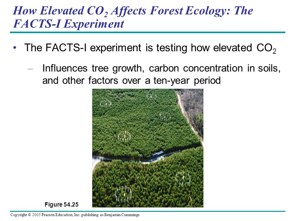 How Elevated CO2 Affects Forest Ecology: The FACTS-I Experiment