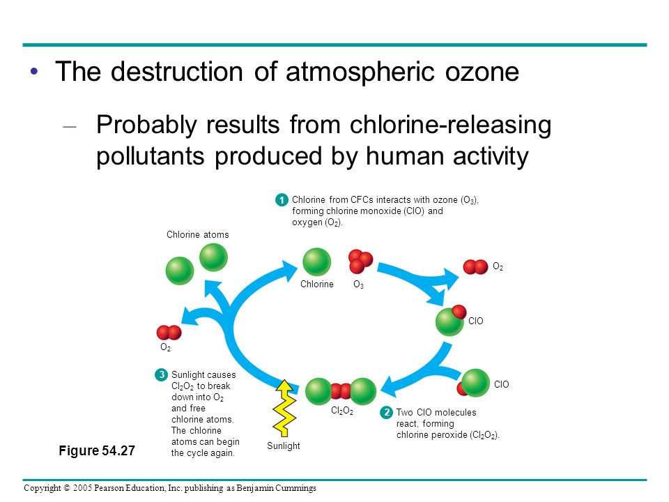 The destruction of atmospheric ozone