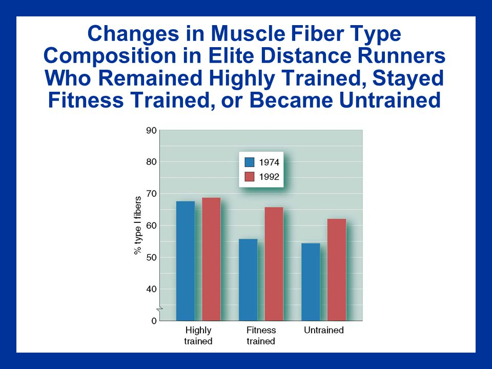 Changes in Muscle Fiber Type Composition in Elite Distance Runners Who Remained Highly Trained, Stayed Fitness Trained, or Became Untrained