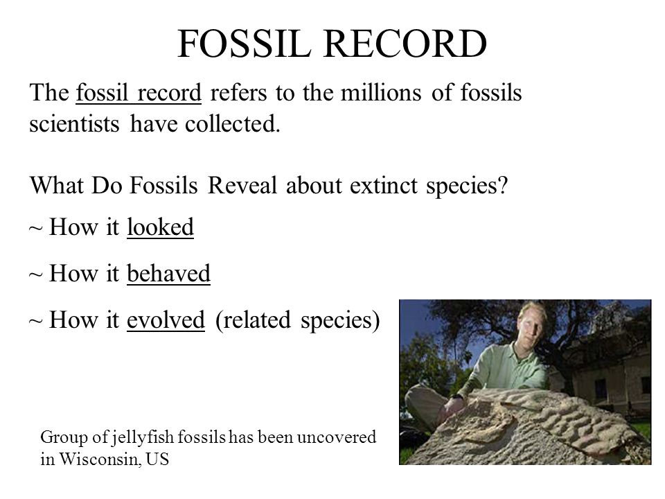 FOSSIL RECORD The fossil record refers to the millions of fossils scientists have collected. What Do Fossils Reveal about extinct species
