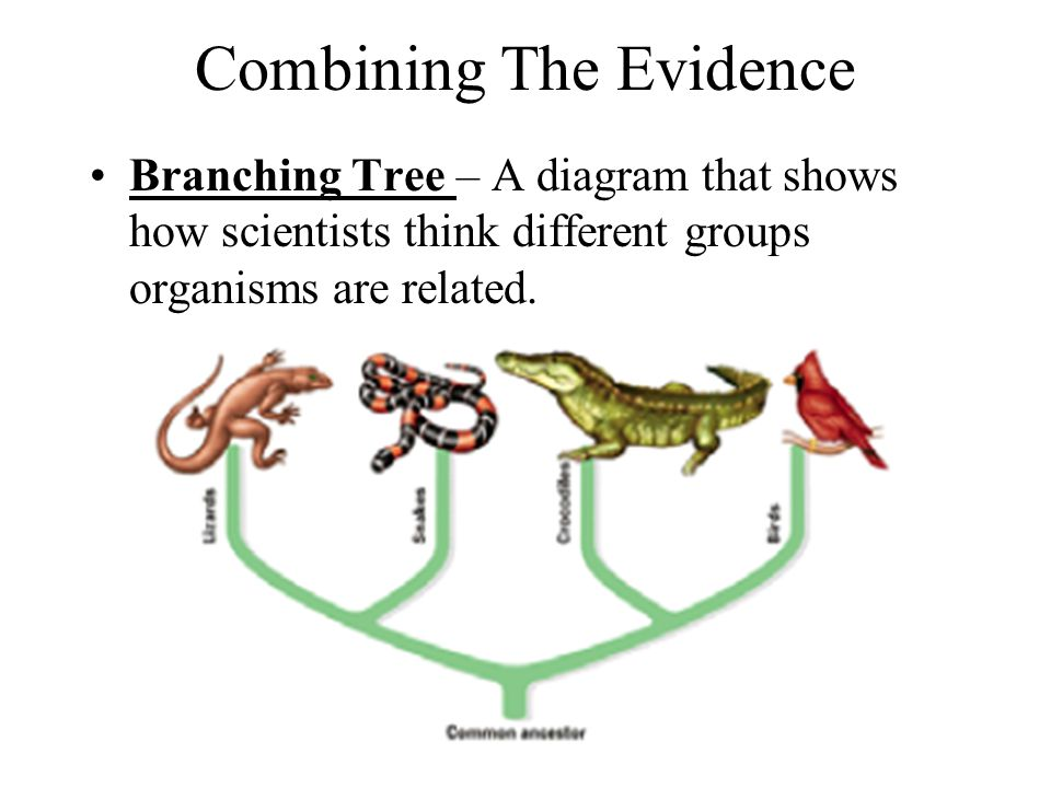 Combining The Evidence