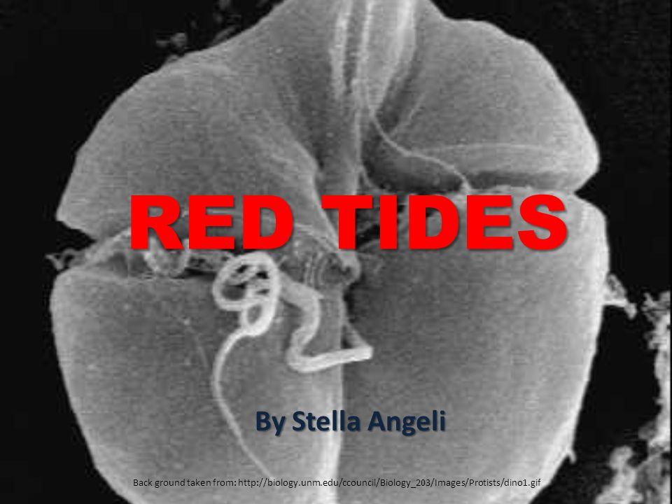 RED TIDES By Stella Angeli