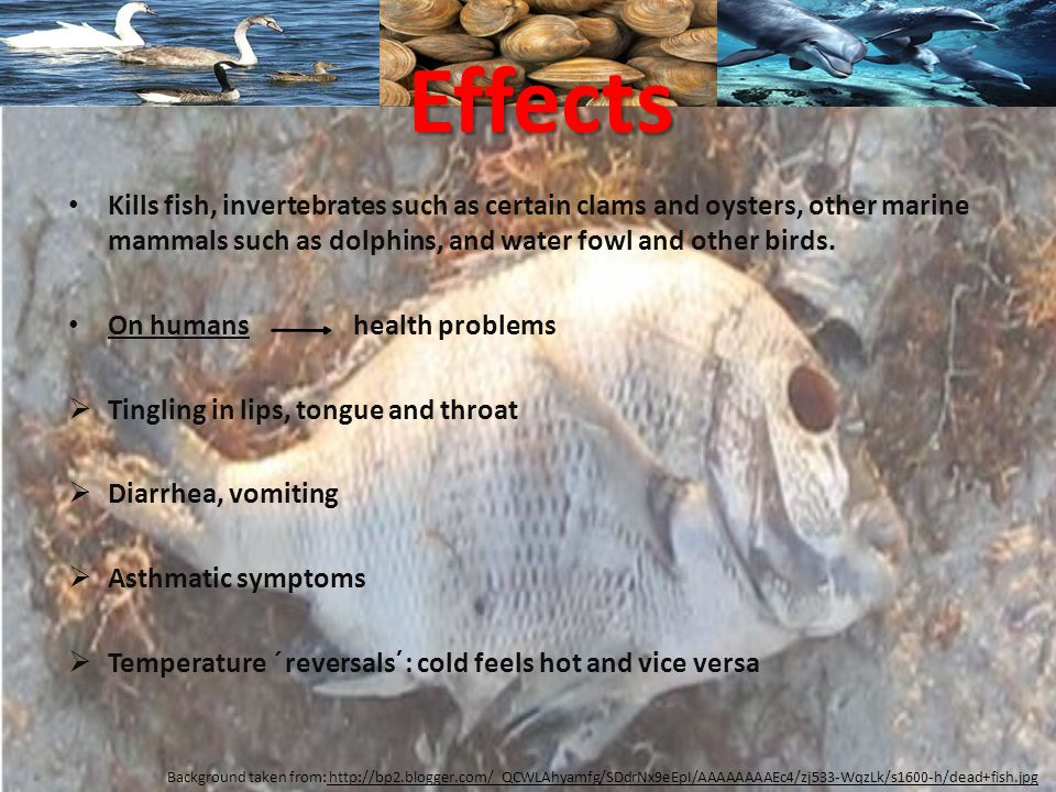 Effects Kills fish, invertebrates such as certain clams and oysters, other marine mammals such as dolphins, and water fowl and other birds.