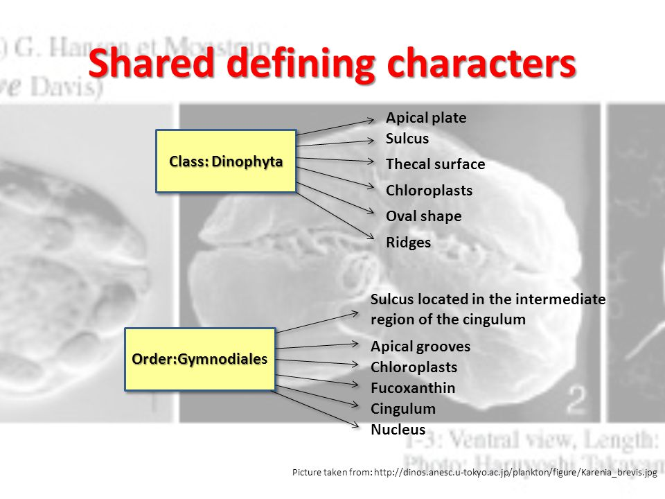 Shared defining characters