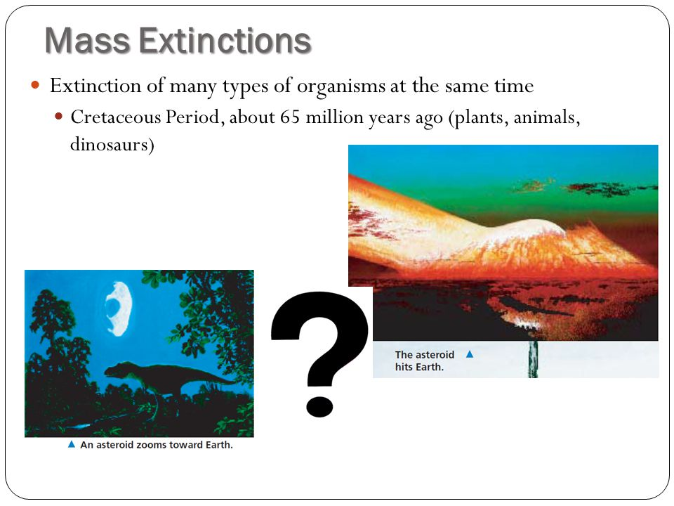 Mass Extinctions Extinction of many types of organisms at the same time.